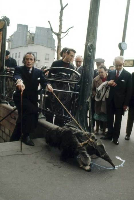Сальвадор Дали с домашним муравьедом выходит из метро. Париж, 1969 год.