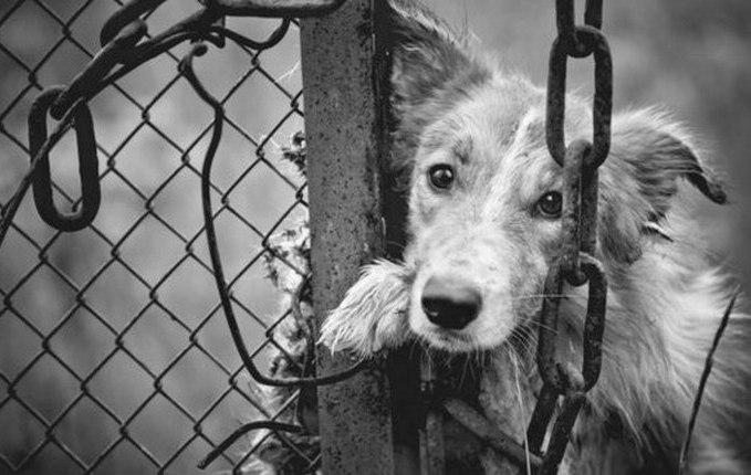 О собаках, ошейниках и несправедливости...
