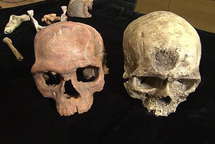 Не факт: появление вида Homo Sapiens.