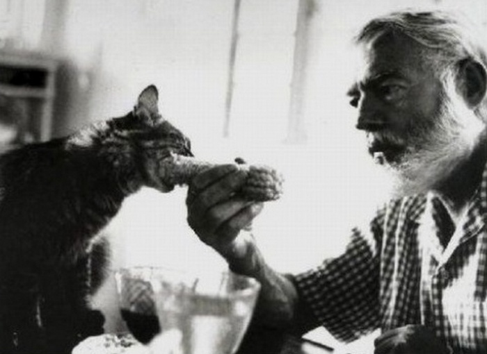 Во Флорида-Кис живут 6-палые кошек - потомки кошек Эрнеста Хемингуэя.