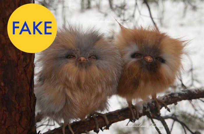Эвоки или совы?