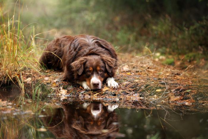 Собачье счастье: очаровательные псы на фотографиях Надежды Ивановой.