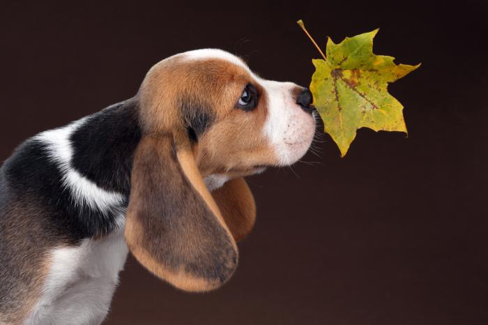 Чем пахнет осень? / Фото: Надежда Иванова.