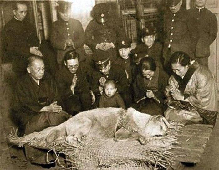 Японцы скорбят об умершем Хатико - самом преданном псе в мире.