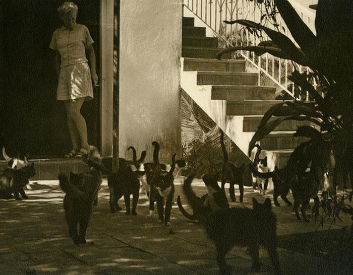 Мэри с кошками на Финка Вихия.