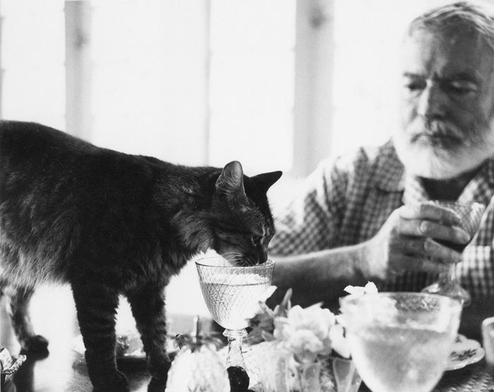 Эрнест Хемингуэй за столом с кошкой Кристобаль в Финка Вихия.