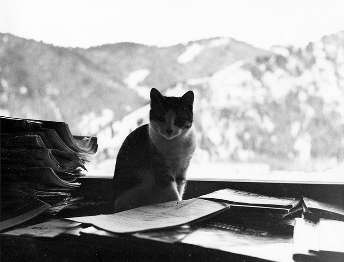 Один из котов Эрнеста Хемингуэя.