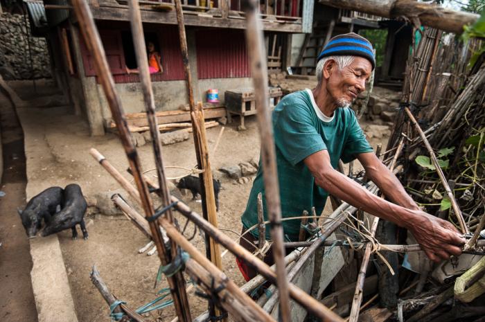 Человек из народности калинга чинит забор в своем свинарнике. Свиньи являются важной частью жизни в Кордильерах — это один из основных источников пищи. Также свиньи используются в ряде различных ритуалов.