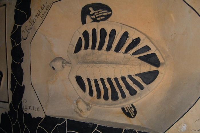 Пещеры Маастрихта: черепаха.