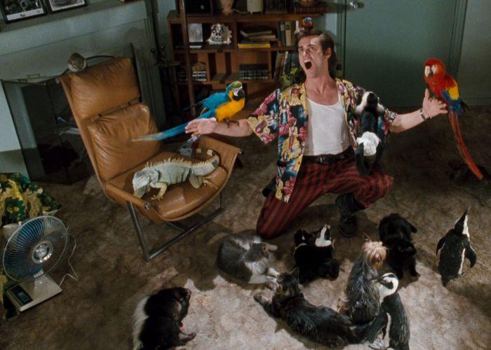 Кадр из фильма «Эйс Вентура: Розыск домашних животных»./фото: hdtv-hdd.ru