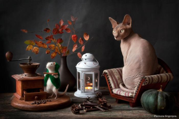 Кофейная пауза. / Фото: Элеонора Григорьева.