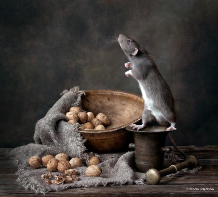 Щелкунчик. / Фото: Элеонора Григорьева.