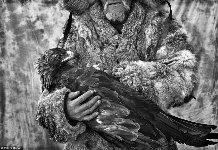 Хотя всем мужчинам в семье разрешено кормить орлицу и брать ее на руки, на охоту ее берет только тот человек, который взял ее из гнезда.