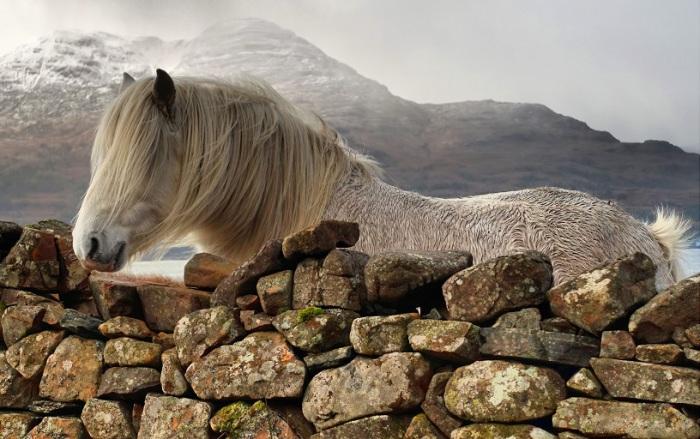 Клайд — лошадь, живущая в гористой местности Шотландии. / Фото: fotoshkola.net