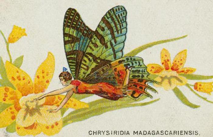 Сигаретные карточки с девушками-бабочками.