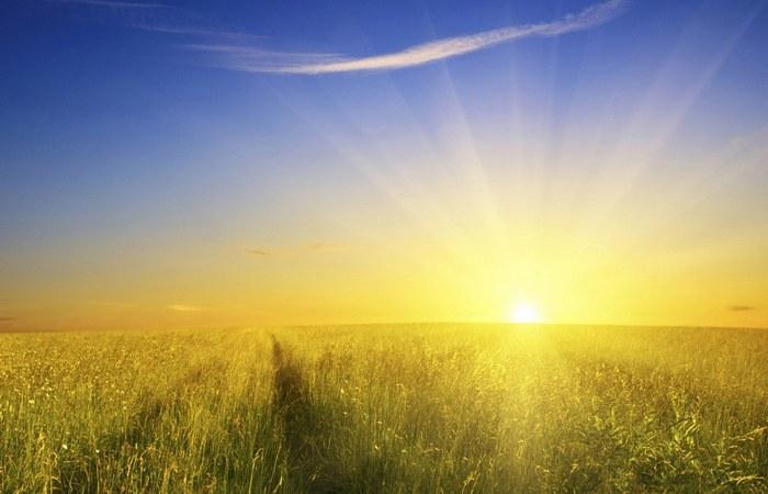 Они одержимы солнцем./фото: artfile.me
