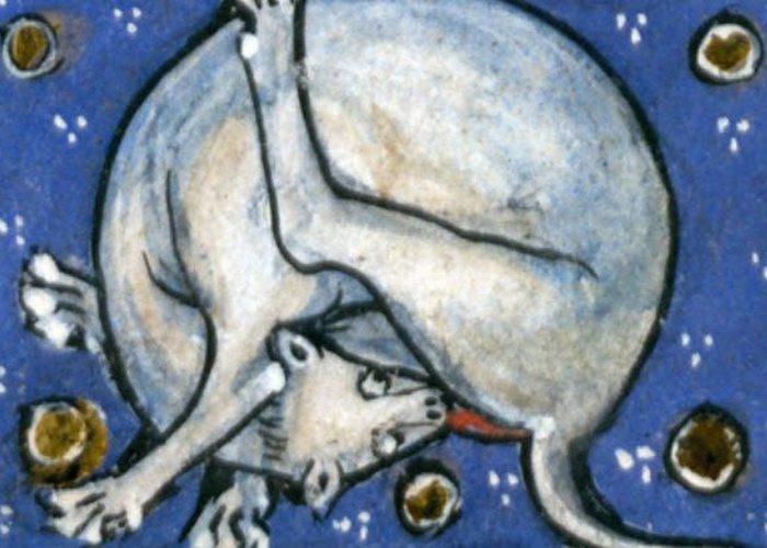 Средневековое искусство: кошки, вылизывающие пятую точку.