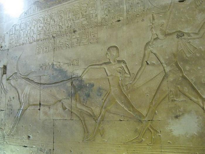 Первенец фараона.