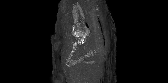 Рентгеновское изображение верхних конечностей и черепа плода. Музей Фицуильяма в Кембридже