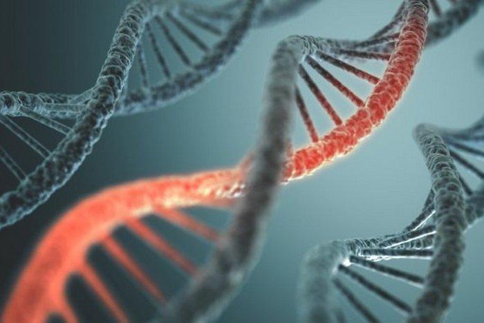 Мумия Эци поможет в исследовании микро-РНК.