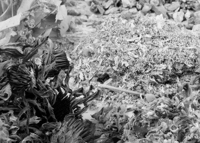 Лечение травами./ Фото: thewom.ru