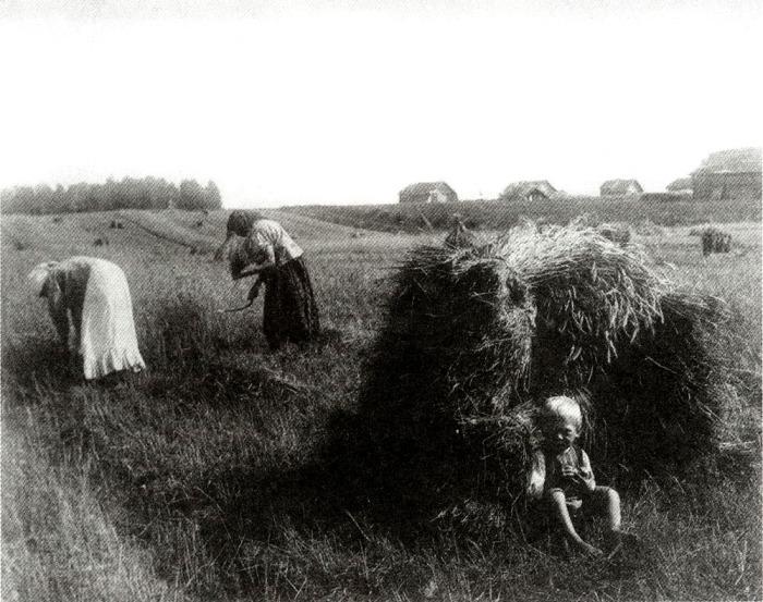 Жатва. Владимирская губерния. Фото 1910-х гг.