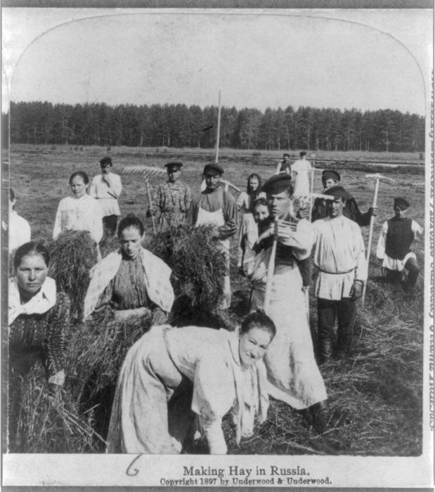 Заготовка сена в России.1897 г.