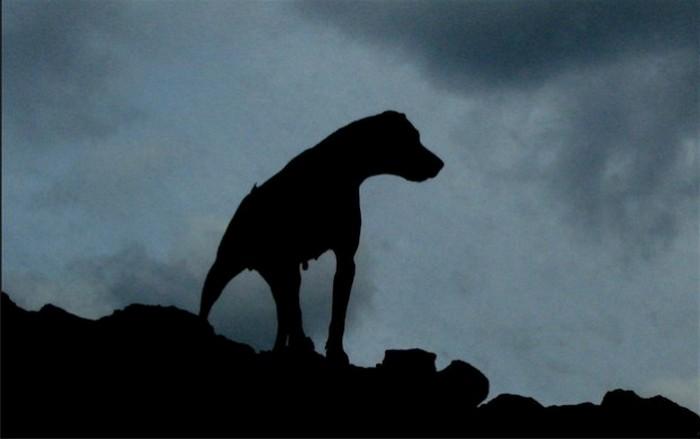 Собака Баскервилей.