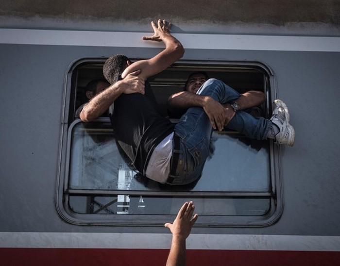 Отчаявшиеся беженцы пытаются через окно забраться в поезд, отправляющийся на Загреб со станции Товарник на границе с Сербией. (The New York Times / Сергей Пономарев - 18 сентября 2015)