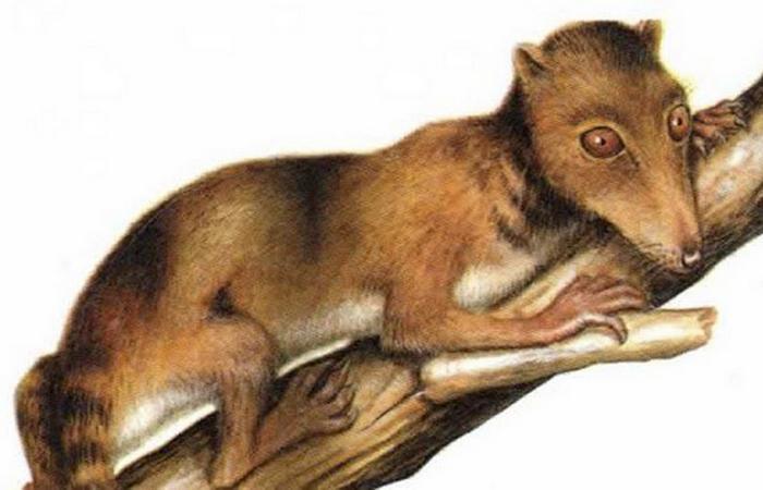 Durlstotherium и Durlstodon являются старейшими экземплярами плацентарных млекопитающих.