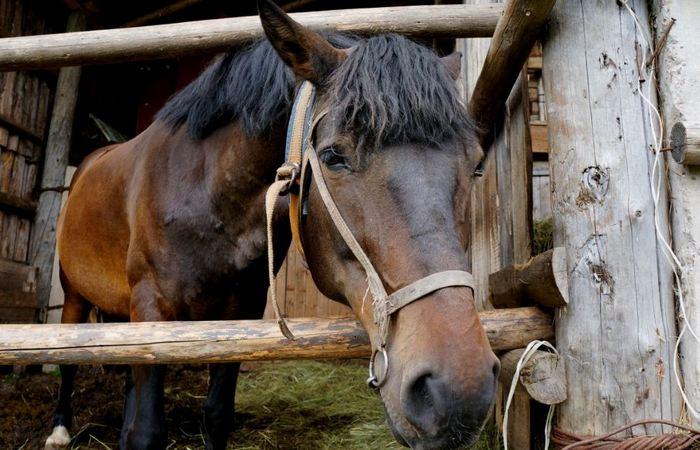 Кража коня - страшное преступление./ Фото: pxhere.com