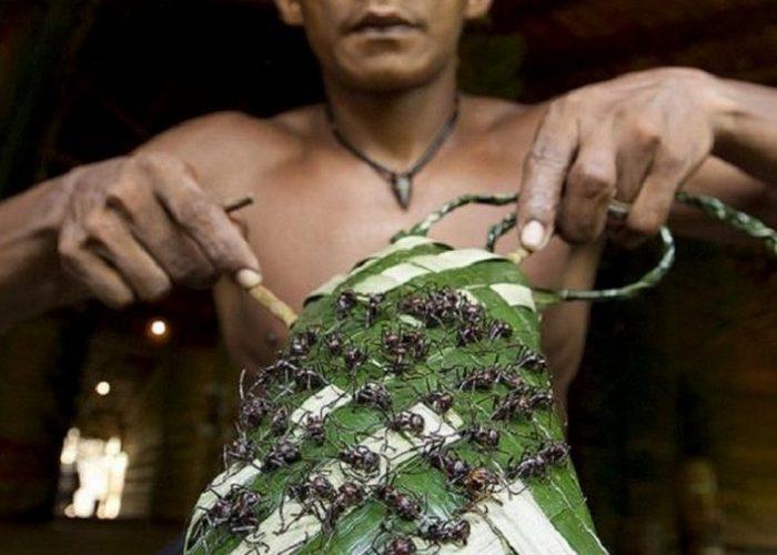 Перчатки из муравьев-пуль.