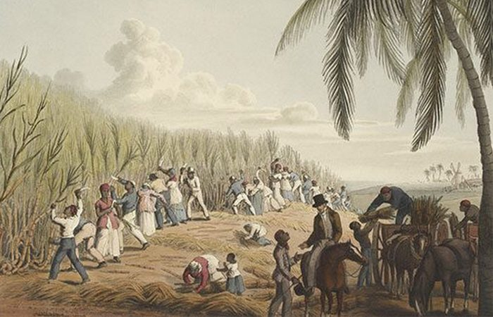 Сахарные плантации - основная причина работорговли.
