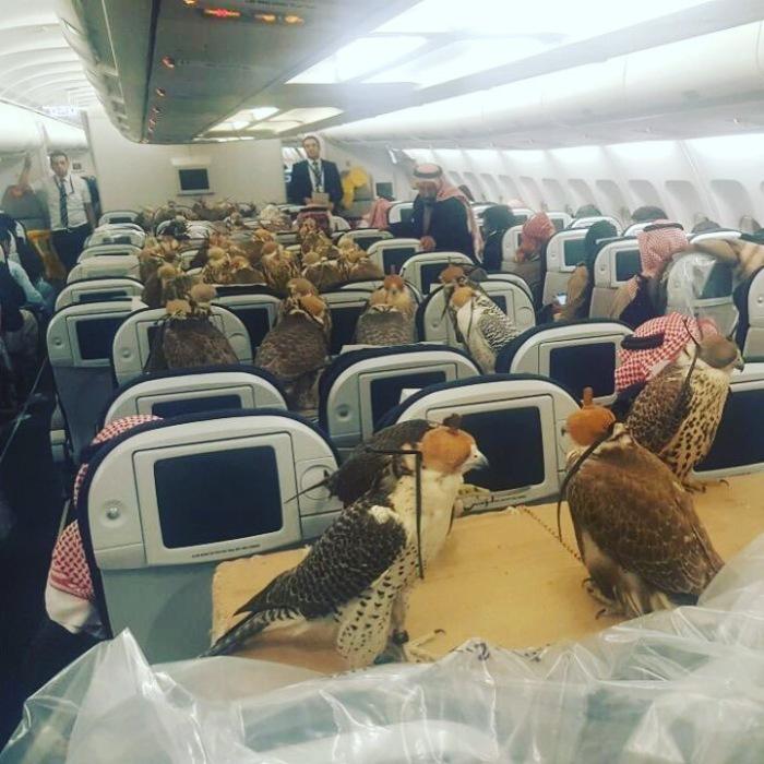 Так выглядел салон самолёта с необычными пассажирами.