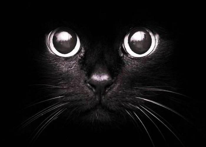 Черная кошка приносит невезение.