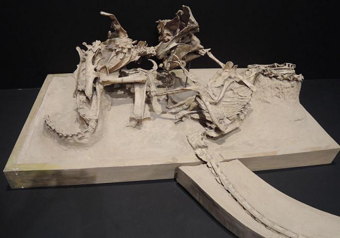 Смертельная схватка динозавров.