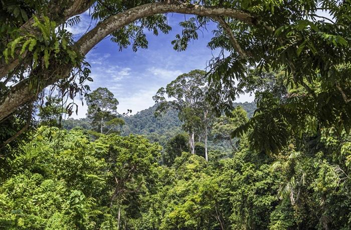 Тропические леса Суматры (Индонезия).