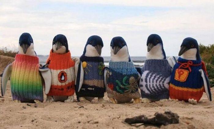 Пингвины в связанных для них свитерах.
