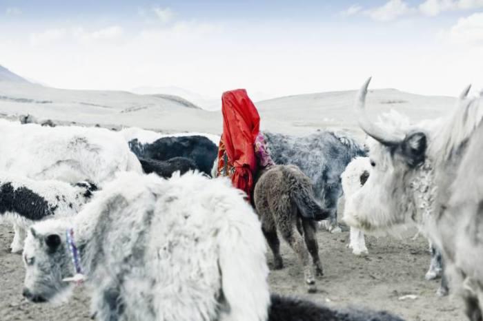 Пастушка.