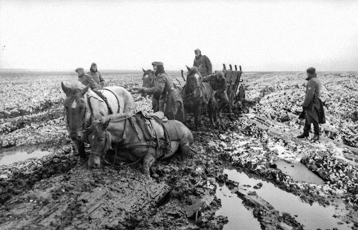 Немецкие лошади, застрявшие в грязи./фото: warhistoryonline.com