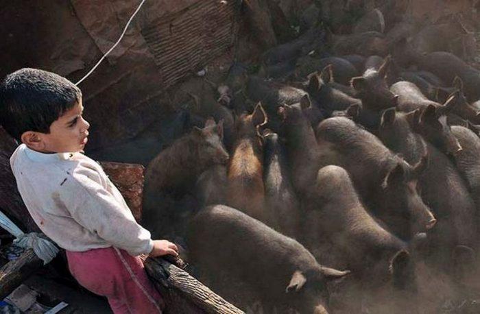 Заббалин - одно из немногих мест в Каире, где можно купить свинину.