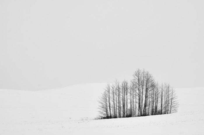 Белорусские зимние просторы. / Фото: Василий Васильков.