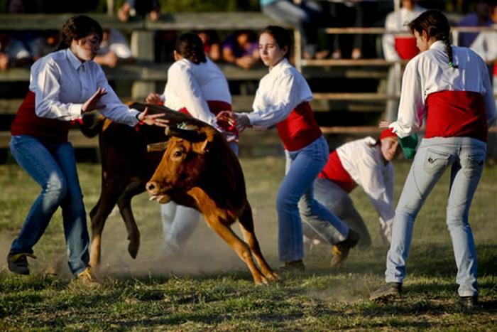Смелые женщины-форкадас быка на скаку остановят!
