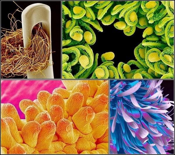 Картинки из микроскопа Susumu Nishinaga