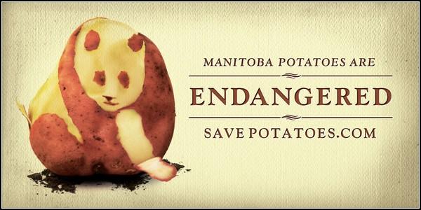 Затаившаяся панда в рекламе: спасите вымирающий картофель