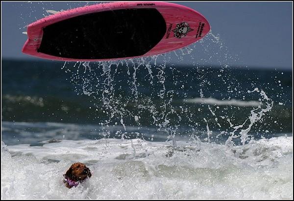 *Да ну вас с вашим серфингом!*