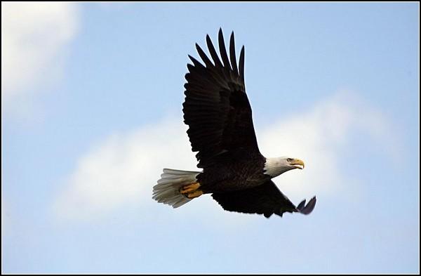 Орлан улетает в небо