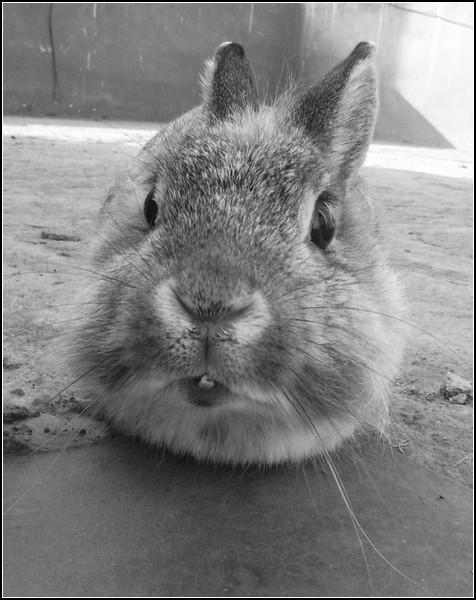 Любовь и кролики: ня