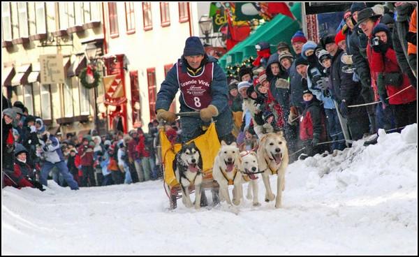 Праздник снеговика: собачьи гонки