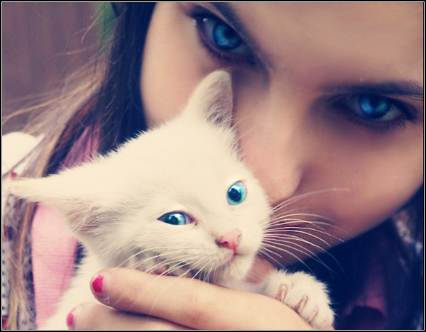 Мы любим кошек